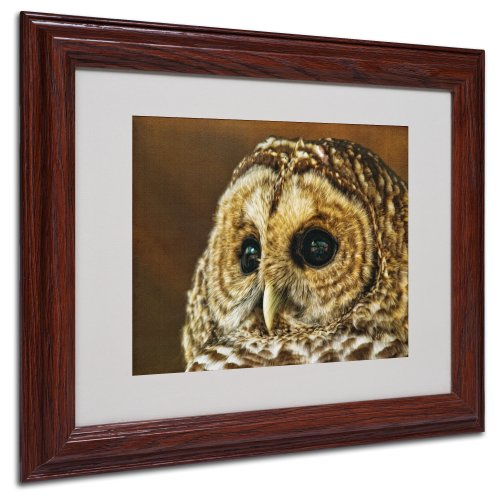 Trademark Fine Art Barred Owl Portrait Matted Framed Art by Lois Bryan with Wood Frame, 11 by 14-Inch
