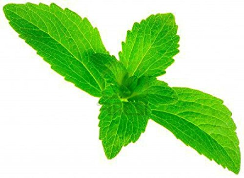 The 8 best stevia plant