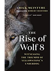 The Rise of Wolf 8: Witnessing the Triumph of Yellowstone's Underdog