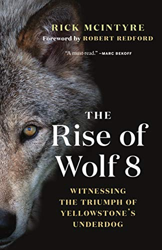 Book Cover: The Rise of Wolf 8: Witnessing the Triumph of Yellowstone's Underdog