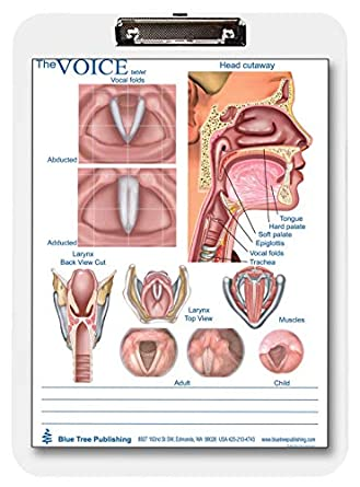 swallowing and larynx/voice clipboard two sided chart and dry erasable:  amazon com: industrial & scientific