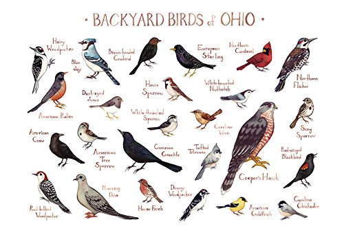 Backyard Birds of Ohio Field Guide Art Print - Amazon.com: Backyard Birds Of Ohio Field Guide Art Print: Handmade