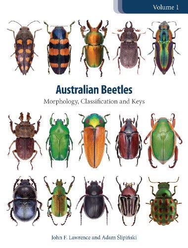Australian Beetles Volume 1: Morphology, Classification and Keys (Australian Beetles Series) Pdf