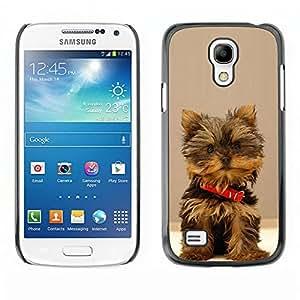 Qstar Arte & diseño plástico duro Fundas Cover Cubre Hard Case Cover para SAMSUNG Galaxy S4 mini VERSION! / i9190 / i9192 ( Yorkshire Terrier Dog Small Brown Furry)