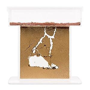 AntHouse - Formicaio Naturale di Sabbia - Kit T Acrilico 15x15x1,5 cm (Formiche Incluse con Regina) 3 spesavip