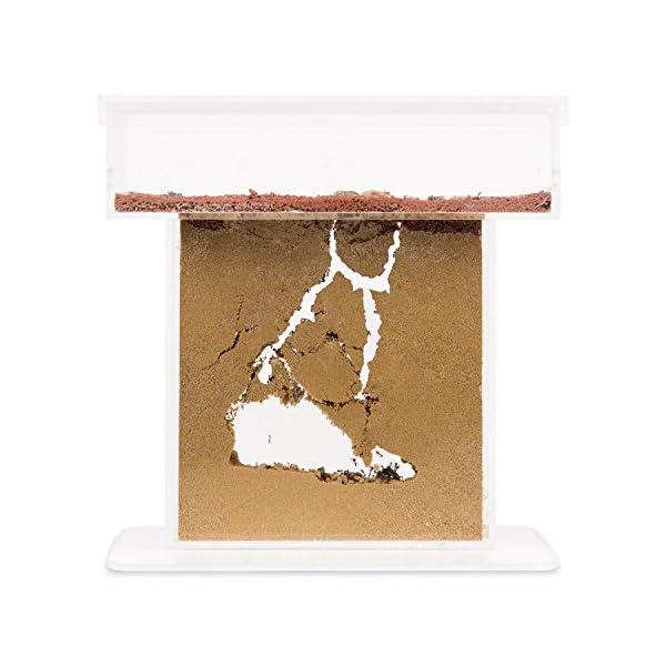 AntHouse - Formicaio Naturale di Sabbia - Kit T Acrilico 15x15x1,5 cm (Formiche Incluse con Regina) 1 spesavip