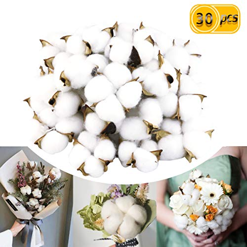 BcPowr 30PCS Natural Cotton Bolls Balls, Dried Cotton Balls, for Wreaths, Decor, Off Stick Branches Wired raw Look White Cotton Branch Picks Great for Crafting Farmhouse Style.]()