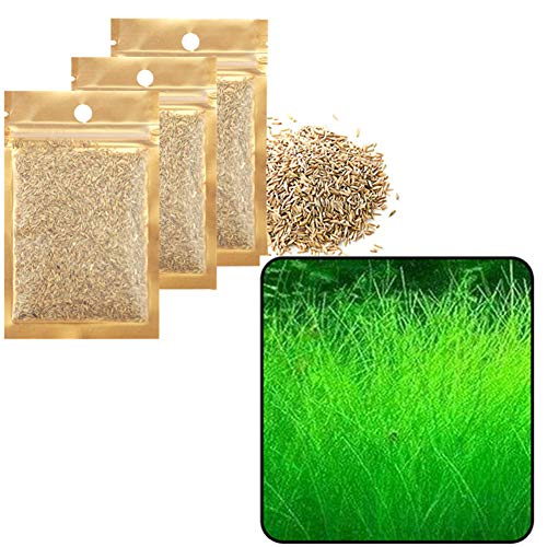 Zafina-UP 3 Pack 1.5 oz Water Plant Seeds Aquarium Water Grass Seed Tall Hairgrass Buffalo Seeds Easy Aquatic Live Grow Plants Fish Tank Decoration Landscape Ornament Aquarium Decor Foreground