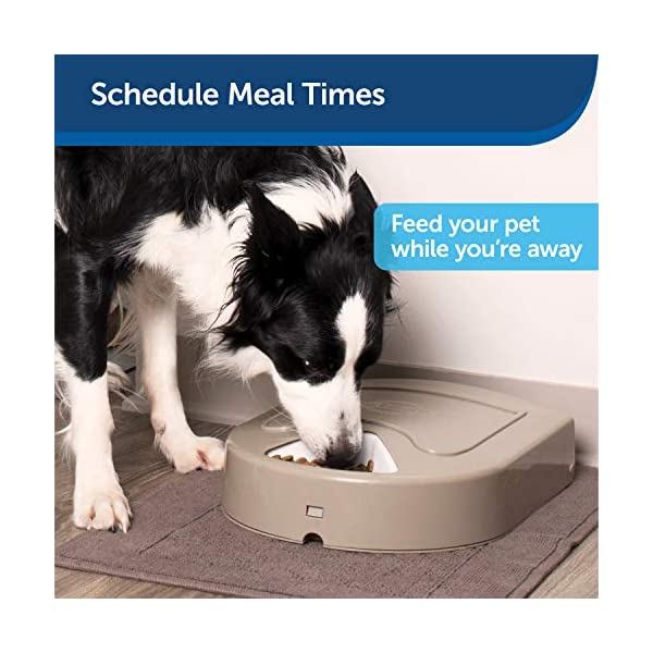 PetSafe-5-Meal-Automatic-Pet-Feeder-Dog-and-Cat-Dry-Food-Dispenser-with-Digital-Clock-and-Portion-Control-1-Cup-Compartment-Portions-5-Cups-Total-Capacity