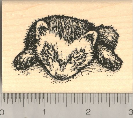 (Sleeping Ferret Rubber Stamp)
