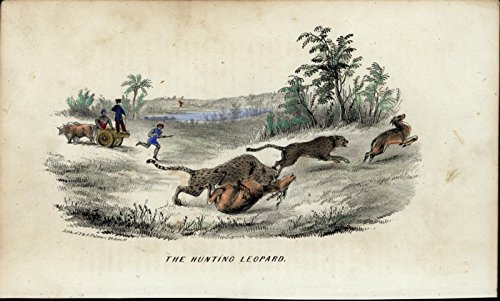 Hunting Leopard Attacking Gazelle c.1855 Palmer NYC antique Lithographed print - Nyc Antique