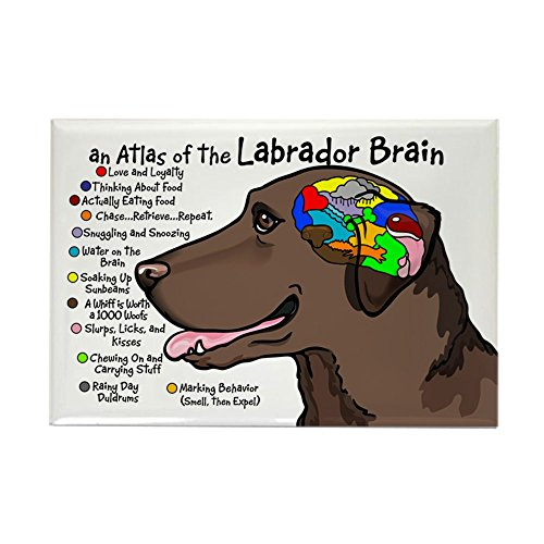 CafePress Chocolate Lab Brain Rectangle Magnet Rectangle Magnet, 2