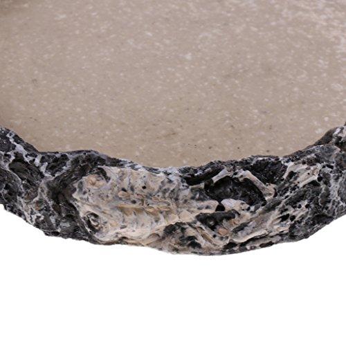 Blesiya Reptile Home Decoration Resin Feeding Bowl Tortoise Gecko Food Water Dish, Dia. 15cm/5.91inch by Blesiya (Image #4)