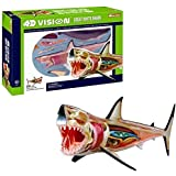 4D Vision Great White Shark Anatomy Model, learning resources anatomy models