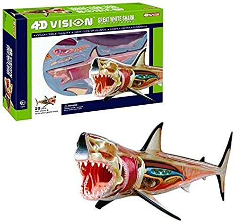 Amazon.com: 4D Vision Great White Shark Anatomy Model, learning ...