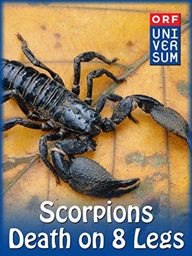 Scorpions - Death on 8 Legs