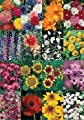 David's Garden Seeds Wildflower Cut Flower Mix DGS30027A (Multi Colors) 500 Open Pollinated Seeds