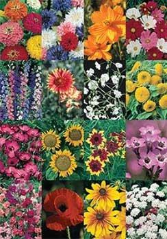 David's Garden Seeds Wildflower Cut Flower Mix DGS30027A (Multi Colors) 500 Open Pollinated Seeds
