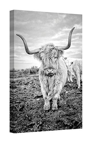 Easy Art Prints Joe Reynoldss Highland Cows V Premium Canvas Art 24 x 16