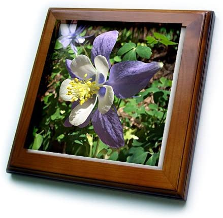 3dRoseDelicate Peach Orchid Blooms Framed Tile 6 x 6