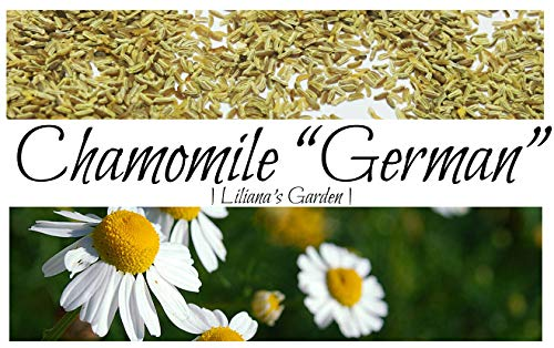 (Herb Seeds - German Chamomile - Medicinal, Flowering, and Edible - Liliana's Garden)