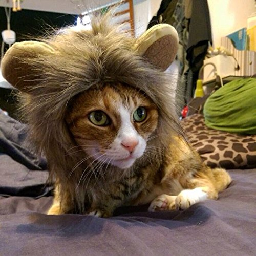 Itplus Pet Cosplay Costume Adjustable Lion Mane Wig Hat for Cat or Small Dog Puppy Hair Accessories Dress up with Ears Christmas Party Festival by Itplus (Image #5)
