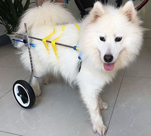 New! Two Wheels Adjustable Dog Wheelchair, cart, 7 Sizes for hind Legs Rehabilitation, 3D Soft Harness,Light Weight, Easy Assemble, Belly Band Specially for Spondylitis (6.New-L) by Newlife Mobility (Image #5)