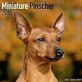 Miniature Pinscher Calendar - Dog Breed Calendars - 2017 - 2018 wall Calendars - 16 Month by Avonside