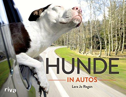 Hunde in Autos