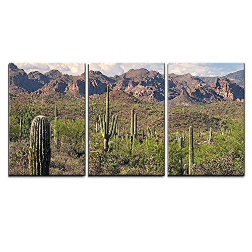 wall26 - 3 Piece Canvas Wall Art - Saguaros in Sonoran Desert. - Modern Home Decor Stretched and Framed Ready to Hang - 16
