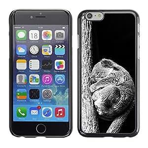 Caucho caso de Shell duro de la cubierta de accesorios de protección BY RAYDREAMMM - Apple Iphone 6 Plus 5.5 - Bebé Sleepy Koala