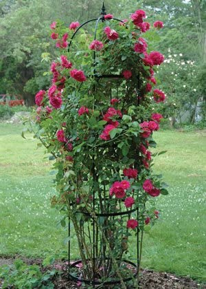 Amazon Com Kis Small Rose Pillar Obelisk Garden Outdoor