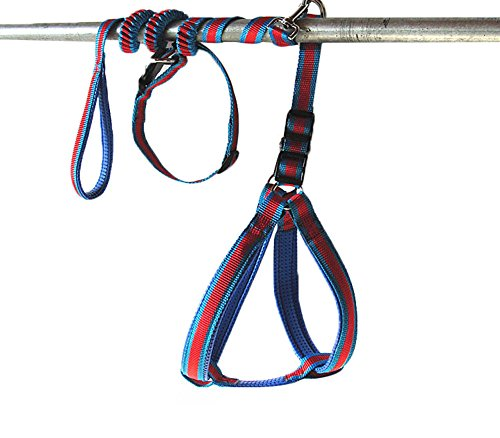 Uniquorn Nlyon Adjustable Loop Walk Elastic Rope Pet Dog Lead Leash (Ez Life Outdoor Furniture Australia)