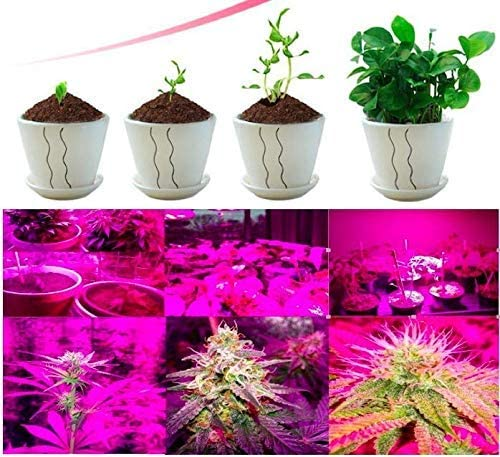 High Brightness 36w Grow Light,Auto ON Off Every Day with Cycle Timer Desktop Plant Light,8 Dimmable Levels,4 8 12H Cycle Timing for Indoor Greenhouse Growing Lamps