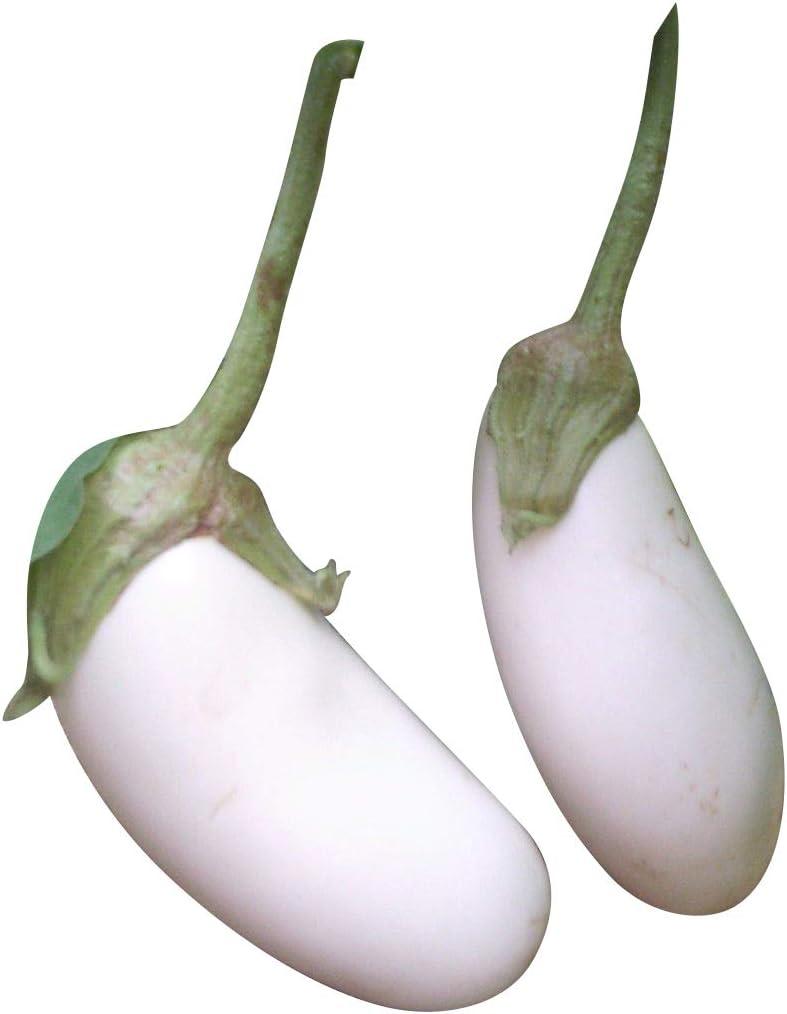 10  AUBERGINEN  CASPER WHITE   SÄMEREIEN GEMÜSE   Samen  Tomaten