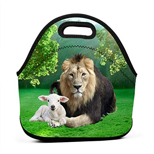 b Beautiful Lunch Bag, Thick Insulated Lunchbox Bags,Tote Box with Zipper Closure for Kid Travel Picnic Office ()