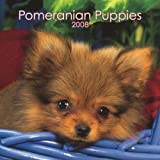 Pomeranian Puppies 2008 Mini Wall Calendar (German, French, Spanish and English Edition)