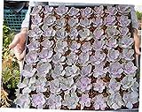 ZAA 5 Pcs Purple Rosette Succulents Favor -Echeveria 'Perle von Nurnberg' - RK39