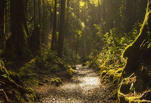 Forest Background Lush Green Vegetation Patches of Sunlight Nature Scene Backdrop Laeacco 10x6.5ft Dreamy Rainforest Path Wallpaper Photography Picture ()