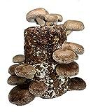 Root Mushroom Farm-Shiitake Mushroom Mini Farm-Starting Right Away