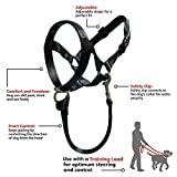 Barkless Dog Head Collar, No Pull Training Tool for Dogs on Walks, Includes Free Training Guide, 5