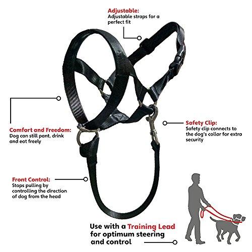 Buy muzzle dog leash
