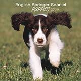 English Springer Spaniel Puppies 2009 7X7 Mini Wall Calendar