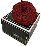 PRESERVED ROSES XXL ROSE (Red-01), REAL PRESERVED ROSES IN A BOX, FROM ECUADOR IN USA, FOR DECORATION, GIFT BOX, WEDDING ARRANGEMENTS, GIFT FOR ANNIVERSARY, FLORAL DESIGN
