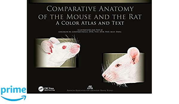 Comparative Anatomy Of The Mouse And The Rat A Color Atlas And Text