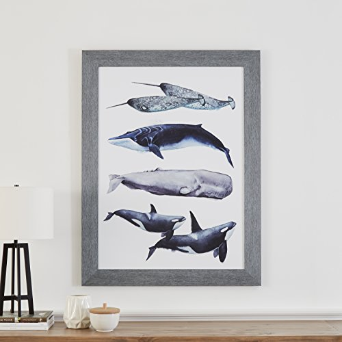 "Stone & Beam Rustic Whale Species Print, Grey Frame, 32"" x 44"""
