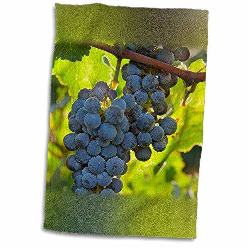 3drose-danita-delimont-grapes-china-xinjiang-xinjiang-uyghur-manas-cabernet-sauvignon-grapes-12x18-t