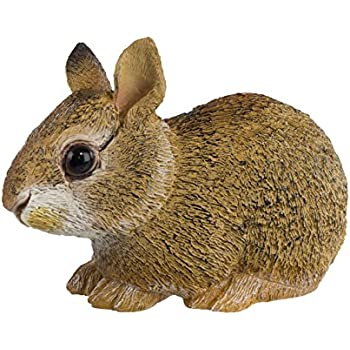 Amazoncom Safari Ltd Incredible Creatures Collection Eastern - Look like real baby animals actually incredibly realistic toys