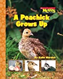 A Peachick Grows Up, Katie Marsico, 0531186997