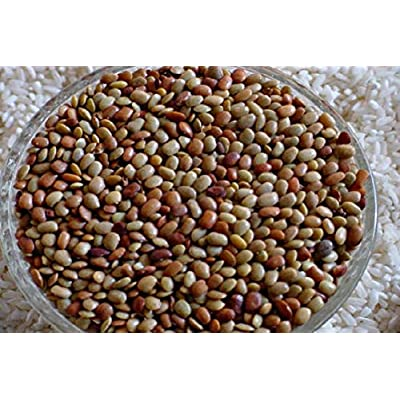 Horse Gram Bean, Seeds (Indian Name: Kulthi) Macrotyloma uniflorum, Untreated Organic Heirloom Bean Seed, for Growing Or Sprouting ! (packet-100 Seeds) by AchmadAnam : Garden & Outdoor